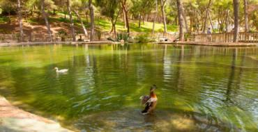 Parques y zonas verdes